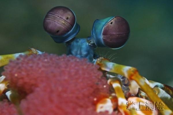 受虾眼启发的水下GPS